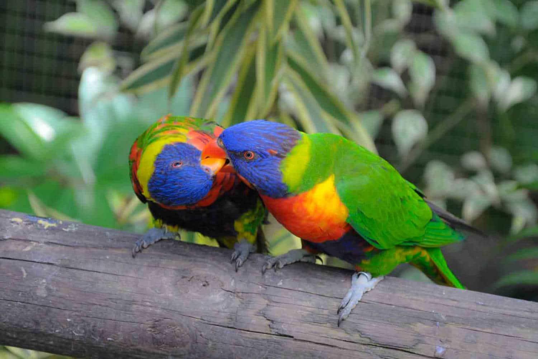 Randonnée dans le parc national de Guadeloupe