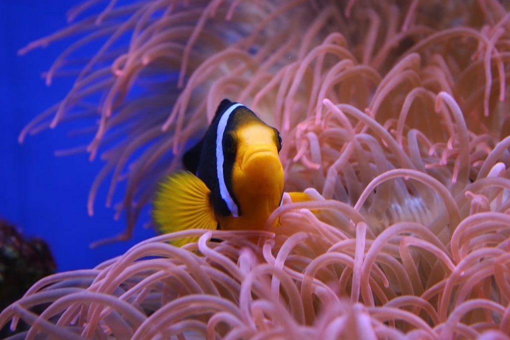 Plonger en Guadeloupe reserve cousteau