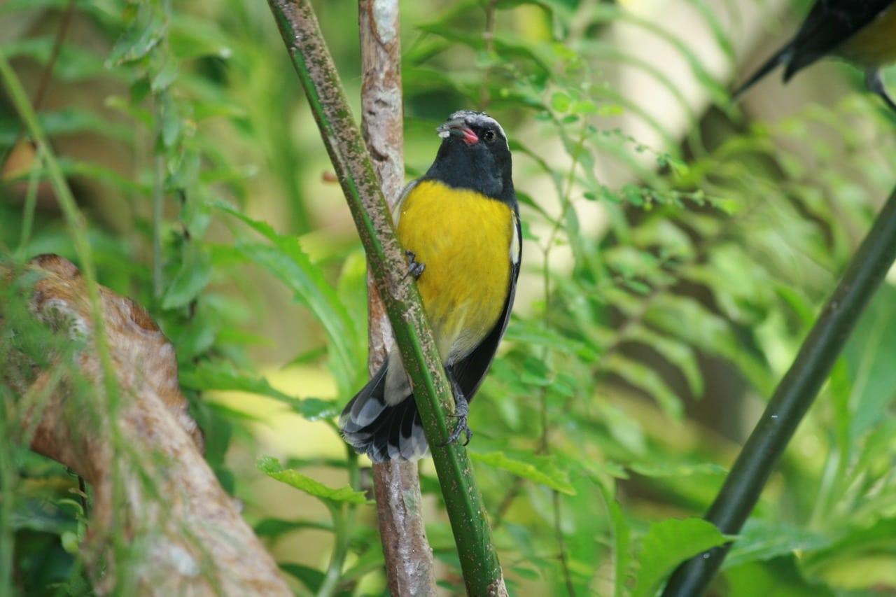 Que voir en Guadeloupe : faune et flore