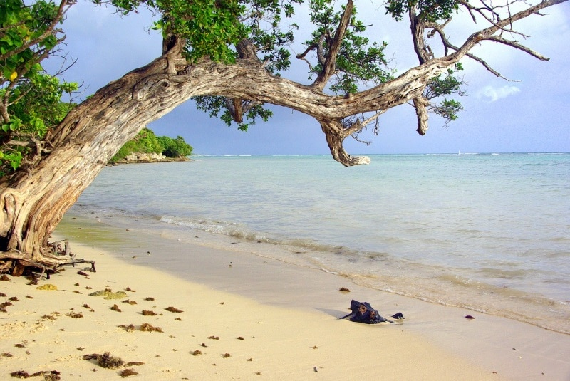 Les plages secrètes de Guadeloupe